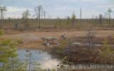 Фото № 5 Архангельск. Весна 2016.  - купить по доступным ценам
