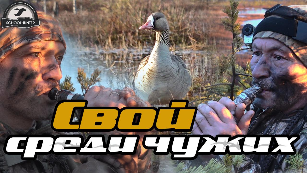 Охота на гуся. Свой среди чужих